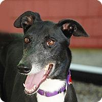 Adopt A Pet :: Ludo - Ware, MA