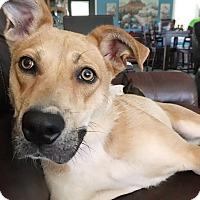 Adopt A Pet :: Ginger - Homewood, AL