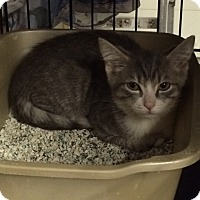 Adopt A Pet :: Clayton - Byron Center, MI