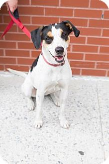 Hound (Unknown Type) Mix Dog for adoption in Brooklyn, New York - Georgia