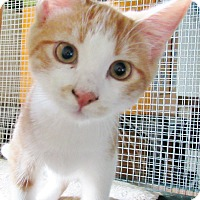 Adopt A Pet :: Daniel - Grinnell, IA