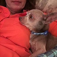 Adopt A Pet :: Maximus - Colmar, PA