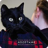 Adopt A Pet :: Petunia - Edwardsville, IL