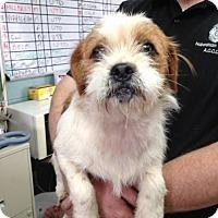 Adopt A Pet :: Sprout - Clarkesville, GA