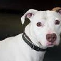 Adopt A Pet :: Archer - Richmond, VA