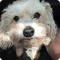 Adopt A Pet :: Glenda - San Antonio, TX