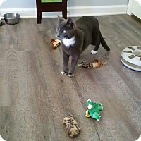 Adopt A Pet :: COURTESY POST - Andy - Chambersburg, PA