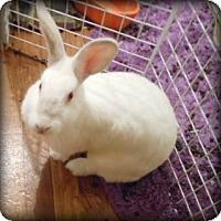 Adopt A Pet :: Nightdrive - Williston, FL
