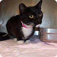 Adopt A Pet :: Daisy - El Cajon, CA