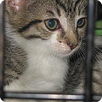 Adopt A Pet :: Oliver - Santa Monica, CA
