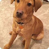 Adopt A Pet :: Abel - Manchester, NH