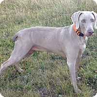 Adopt A Pet :: Maizey - Grand Haven, MI