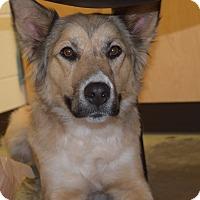 Adopt A Pet :: BRYNN - CHICAGO, IL