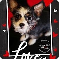 Adopt A Pet :: Sara - Shawnee Mission, KS