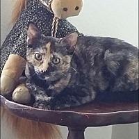 Adopt A Pet :: Spunky - Nuevo, CA