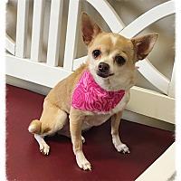 Adopt A Pet :: Hali - Los Alamitos, CA