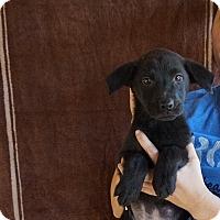 Adopt A Pet :: Camila - Oviedo, FL