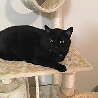 Adopt A Pet :: Dexter - Tallahassee, FL