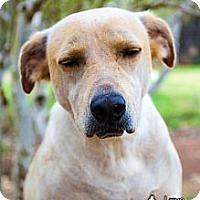 Adopt A Pet :: Junebug - Spring Branch, TX
