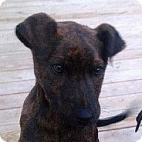 Adopt A Pet :: A-Pups #2 - Tyler, TX