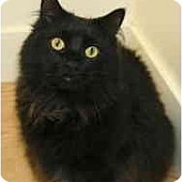 Adopt A Pet :: Mr. Peepers - Milwaukee, WI