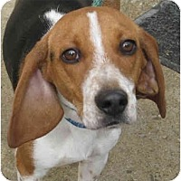 Adopt A Pet :: Edison-ADOPTED - Indianapolis, IN