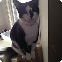 Adopt A Pet :: Gigi - Orillia, ON