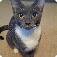 Adopt A Pet :: Lady - East Hanover, NJ