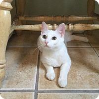 Adopt A Pet :: ELSA  aka LUNA 2015 - Hamilton, NJ