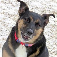 Adopt A Pet :: CJ - Meridian, ID
