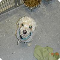 Adopt A Pet :: CASEY - Sandusky, OH
