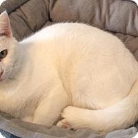 Adopt A Pet :: Casper - Transfer, PA