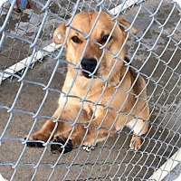 Adopt A Pet :: Mitzy - Aurora, MO
