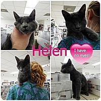 Adopt A Pet :: Helen - Chilhowie, VA