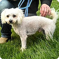 Adopt A Pet :: Chipper - Seattle, WA