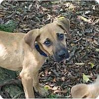 Adopt A Pet :: Domanick - Albany, NY