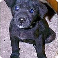 Adopt A Pet :: Bobbie Joe - dewey, AZ