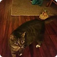 Adopt A Pet :: Abbie - Troy, OH