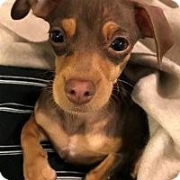 Adopt A Pet :: Florence - San Diego, CA