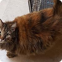 Adopt A Pet :: Winnie - Pasadena, CA