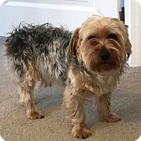Adopt A Pet :: Jax - available 4/30 - Sparta, NJ