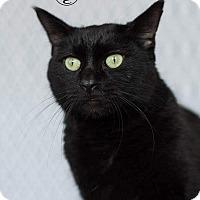 Adopt A Pet :: Spades - Columbus, OH