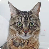 Adopt A Pet :: Roya - Toronto, ON