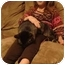 Photo 2 - Domestic Shorthair Cat for adoption in Washington Terrace, Utah - Buddy