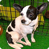 Adopt A Pet :: Tia - Phoenix, AZ