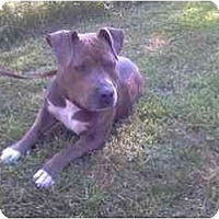 Adopt A Pet :: Sonny - Chicago, IL