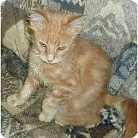 Adopt A Pet :: Piper - Elmira, ON
