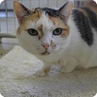 Adopt A Pet :: Bindi Sue - East Smithfield, PA