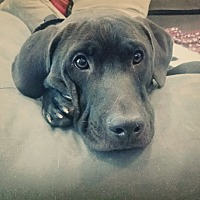 Adopt A Pet :: Reba - Dallas, TX