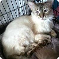 Adopt A Pet :: Tyffini - Medford, NJ